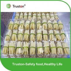 Frozen Bundled White Asparagus China