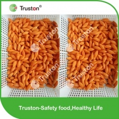 IQF frozen carrot in olive shape